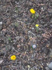 我が家にもいよいよ春がやってきました。\(^ー^)/岡地