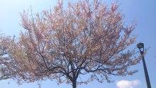 春の日の暖かさ