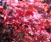 だいぶ、秋が深まって来ました。