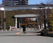 久しぶりに、宇都宮城の公園をのぞいてみました!が……