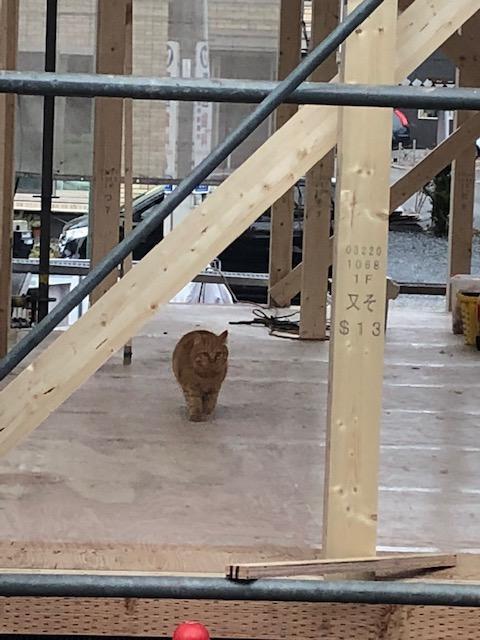 上棟作業中の現場!建物の足元には、にゃんこが!