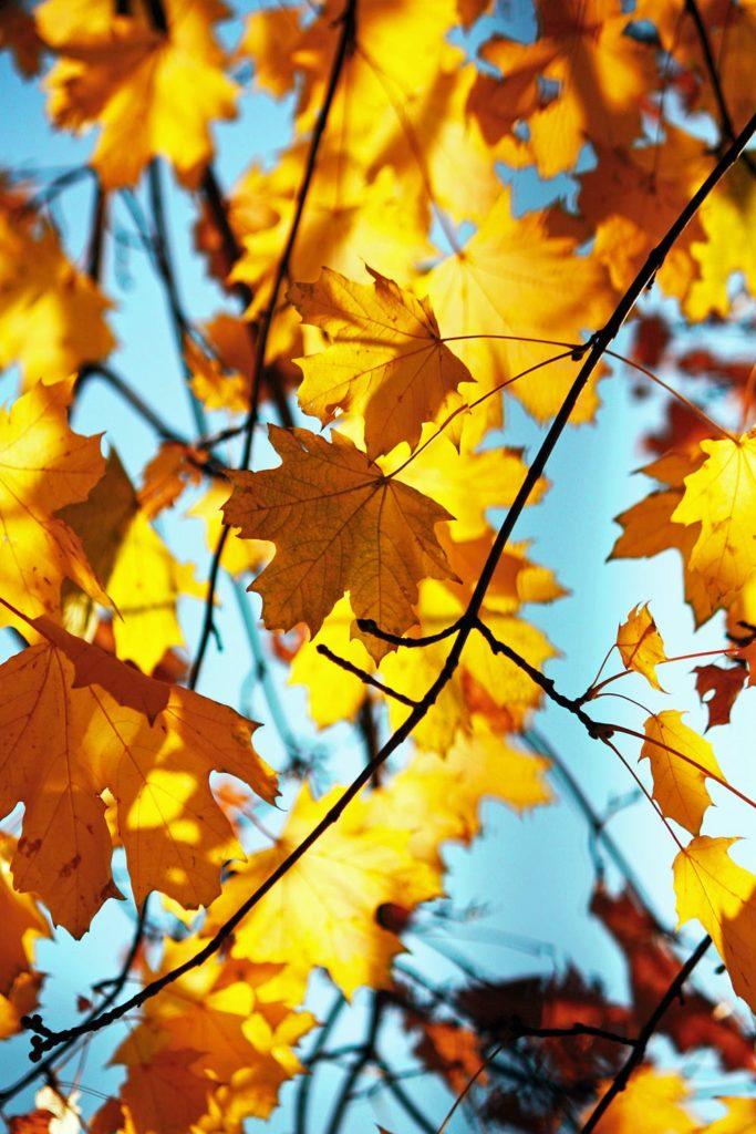 すっかり、秋の気配!